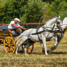 True horse power.. by Željko Salai - Sports & Fitness Other Sports