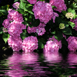 pink flowers by LADOCKi Elvira - Digital Art Things ( flowers )