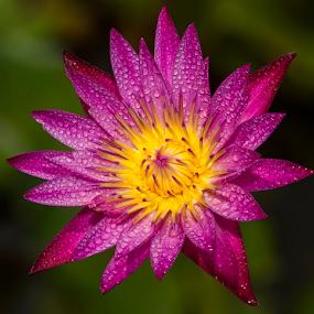 by Dmitri Molido - Flowers Single Flower