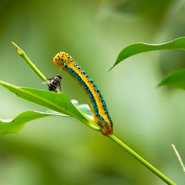 Face to face by Madhu Soodanan - Animals Insects & Spiders