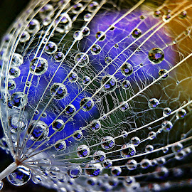 What A wonderful World by Marija Jilek - Nature Up Close Natural Waterdrops