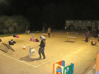 Dog trainer Heathcote Junction