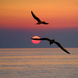Sunset with seagulls by Fernando Ale - Landscapes Sunsets & Sunrises