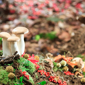 Mushrooms by Ray Shiu - Nature Up Close Gardens & Produce ( mushroom, wild, magic, fungi, yard, mound, trail, vegetation, woods, garden,  )