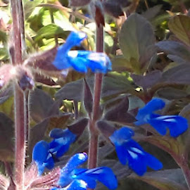 Find Pappa Smurf by Jenna Williams - Nature Up Close Other plants