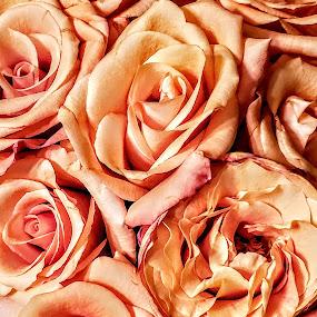 by Nancy Tonkin - Flowers Flower Arangements