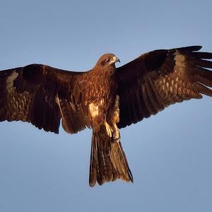 Kite Aug 31.jpg