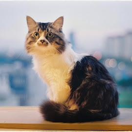Lovely friend by Khải Lê Hữu - Animals - Cats Kittens ( film, cat, fujifilm, analog, animal )