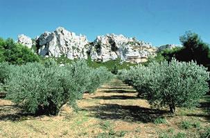 photo de Unité pastorale - Vallée des Baux