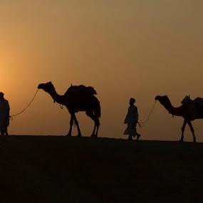 Sunset Over The Desert by Janet Marsh - Landscapes Sunsets & Sunrises ( indiapart1,  )