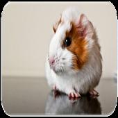 App Guinea Pig sounds APK for Kindle