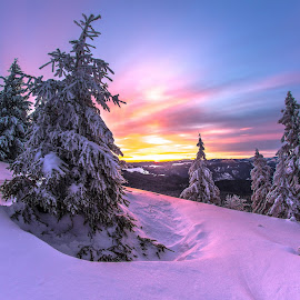 The purple forest by Geo Cozma - Landscapes Forests ( purple, wide angle, snow, pine trees, sunrise )