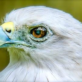 Im Hungry Now by Ken Nicol - Animals Birds (  )