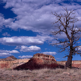 Lone tree in NM by Gwen Paton - Landscapes Deserts ( clouds, desert, tree, taos, landscape, new mexico,  )