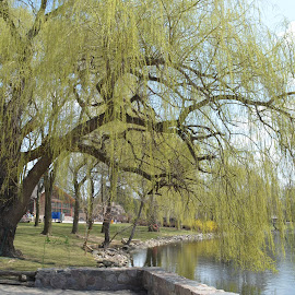 by Chasity Patterson - City,  Street & Park  City Parks ( relax, tranquil, relaxing, tranquility )