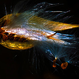 Seed pod dispersing by David Winchester - Nature Up Close Other Natural Objects