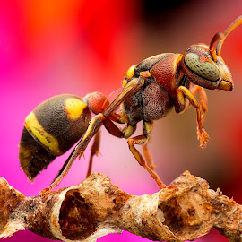 Wasp by Carrot Lim - Animals Insects & Spiders (  )