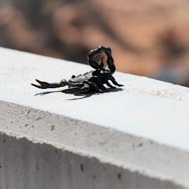 Scorpion by Diane Garcia - Artistic Objects Other Objects ( scorpion )