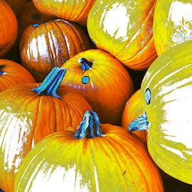 you know it's fall when pumkins began to show by Traceystar Meyer - Novices Only Objects & Still Life