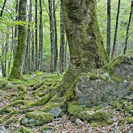 by Siniša Almaši - Nature Up Close Trees & Bushes ( up close, tree, nature, trees, forest, view, stones, landscape, light, rocks, woods )