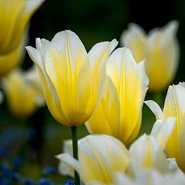 Yellow by Darren Sutherland - Flowers Flower Gardens