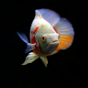 It's me by Anif Putramijaya - Animals Fish
