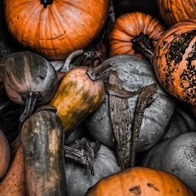 Pumpkins by Opreanu Roberto Sorin - Nature Up Close Gardens & Produce ( macro, hdr, pumpkins, close up, garden, produce,  )