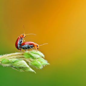 What you see by Muhamad Firman - Animals Insects & Spiders