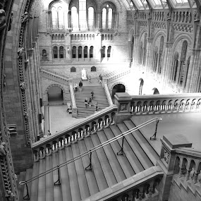 Natural History Museum London by Adam Knauz - Buildings & Architecture Public & Historical ( pwcbuilding-dq )