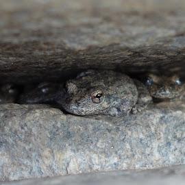 Version 2 by Rick Luiten - Animals Amphibians (  )