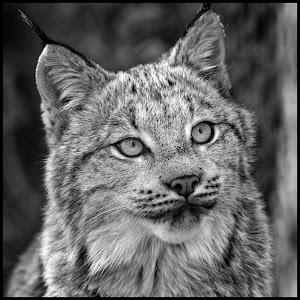 Lynx-48.jpg