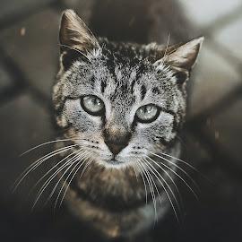 Jack by Rafał Wójcicki - Animals - Cats Portraits ( cat, rafalwojcicki, dublin, navan, portrait, animal )