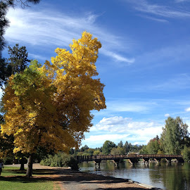 Fall walk by Wendy Cooley - City,  Street & Park  City Parks ( park, fall, bend, bridge,  )