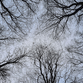Looking Up by Catherine Riddell - Novices Only Flowers & Plants ( #forest )