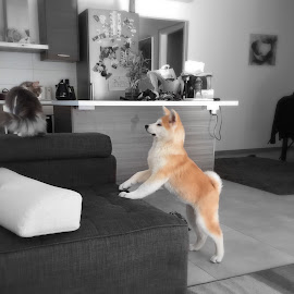 I am gonna catch that cat someday by Alexandros Shiamaris - Animals - Dogs Puppies ( chiaki yasashii shidousha )