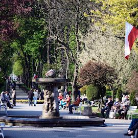 Słoneczna aleja zdrojowa by Marek Rosiński - City,  Street & Park  City Parks ( boulevard, promenade, road, street, park scene, tree, avenue, park, footpath )