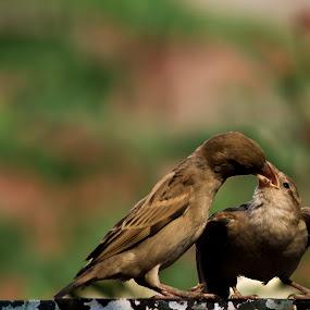 by Shikhar Srivastava - Animals Birds