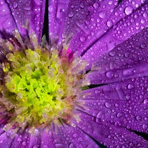 bunga10.jpg