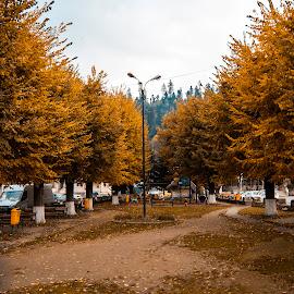 Autumn by Dani Marc - City,  Street & Park  City Parks ( park, beautiful, orange leaves, autumn colors, city park )