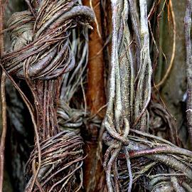Knots by Isa Pat - Nature Up Close Trees & Bushes