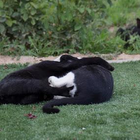 Juegos by Daly Sda - Animals - Cats Playing ( playing, gato, cat, juegos,  )