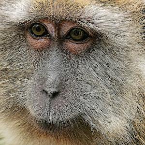 Monkey18101501.jpg
