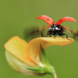 Uçuş zamanı by Mustafa Öztürk - Animals Insects & Spiders