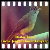 Free Download Master Kicau Cucak Jenggot Gacor APK for Samsung