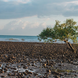 Lone Tree  by Ruth Tomlinson - Landscapes Beaches ( tree, lone, seaside, beach, coastal )