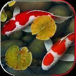 Koi pond 3D Icon