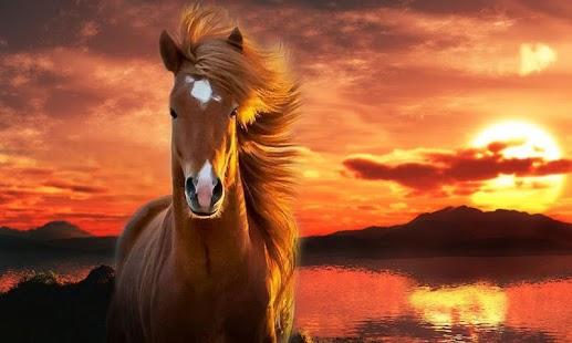 фото лошадей на заставку телефона № 20667 бесплатно