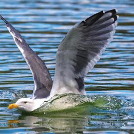 Bird 98322 by Raphael RaCcoon - Animals Birds (  )