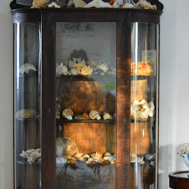 Sea Shell Curio by Becky Luschei - Artistic Objects Furniture ( curio, shells, 1900, sea, collection, mahogany, antique )