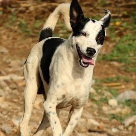 by Mukesh Chand Garg - Animals - Dogs Running (  )
